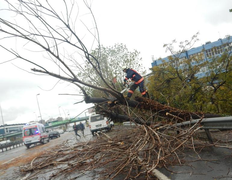 Zeytinburnunda ağaç devrilmesi  - Haberler - İstanbul İtfaiyesi