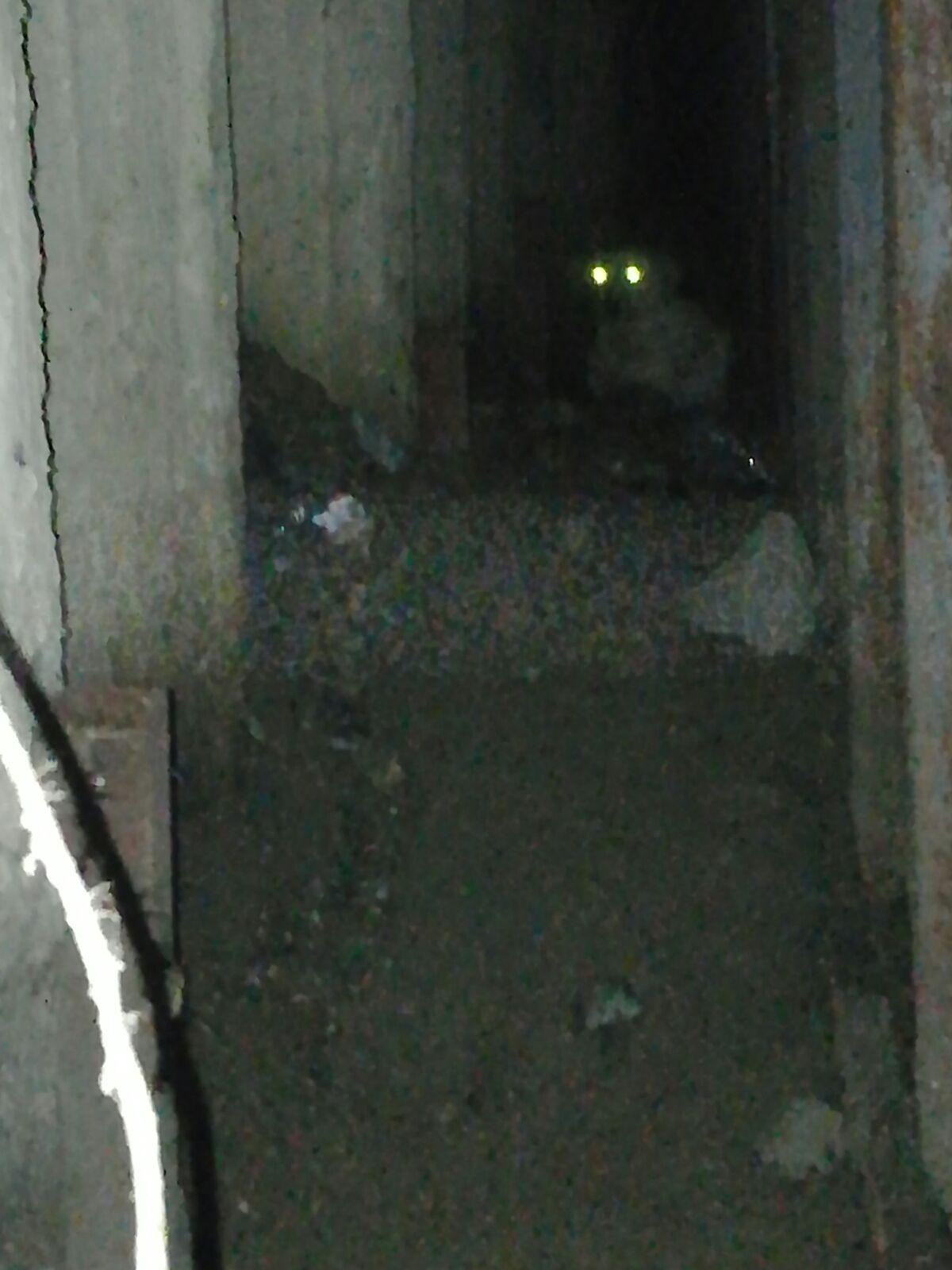 Esenyurtta hayvan kurtarma - Haberler - İstanbul İtfaiyesi