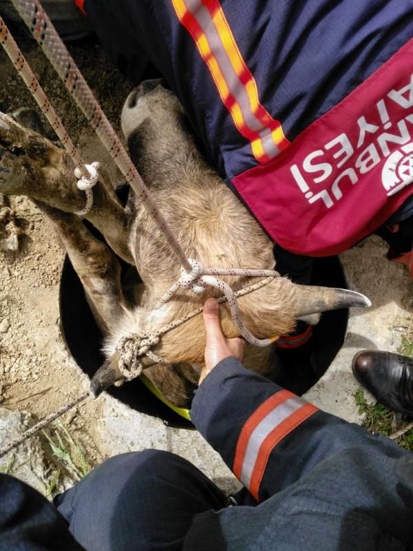 Su kuyusuna düşen büyükbaş hayvanı kurtardık - Haberler - İstanbul İtfaiyesi