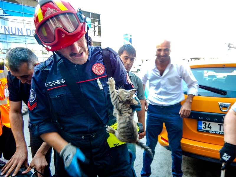 Yavru kediyi özgürlüğüne kavuşturduk - Haberler - İstanbul İtfaiyesi