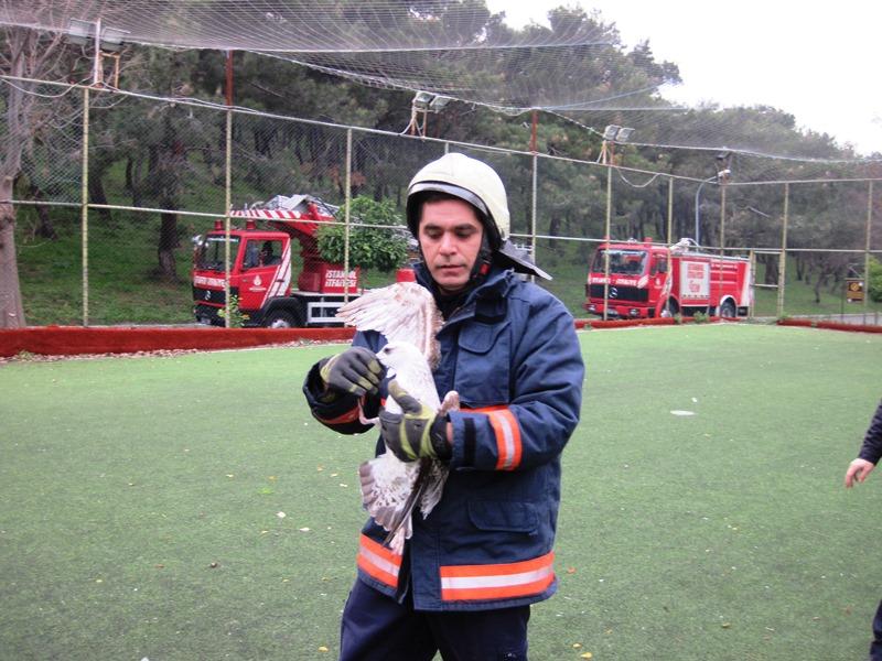 Heybeliadada martı kurtarma - Haberler - İstanbul İtfaiyesi