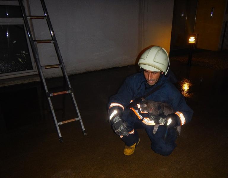 Orhanlıda mahsur kalan kediyi kurtardık - Haberler - İstanbul İtfaiyesi
