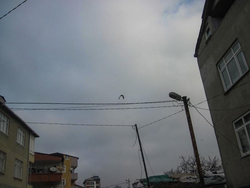 Kartalda mahsur kalan dostumuzun imdadına yetiştik - Haberler - İstanbul İtfaiyesi