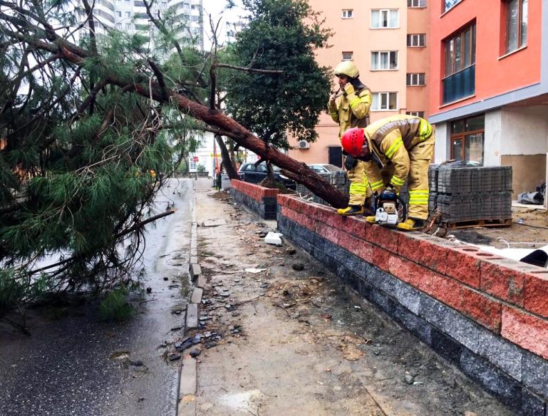 Kadıköyde ağaç devrildi - Haberler - İstanbul İtfaiyesi