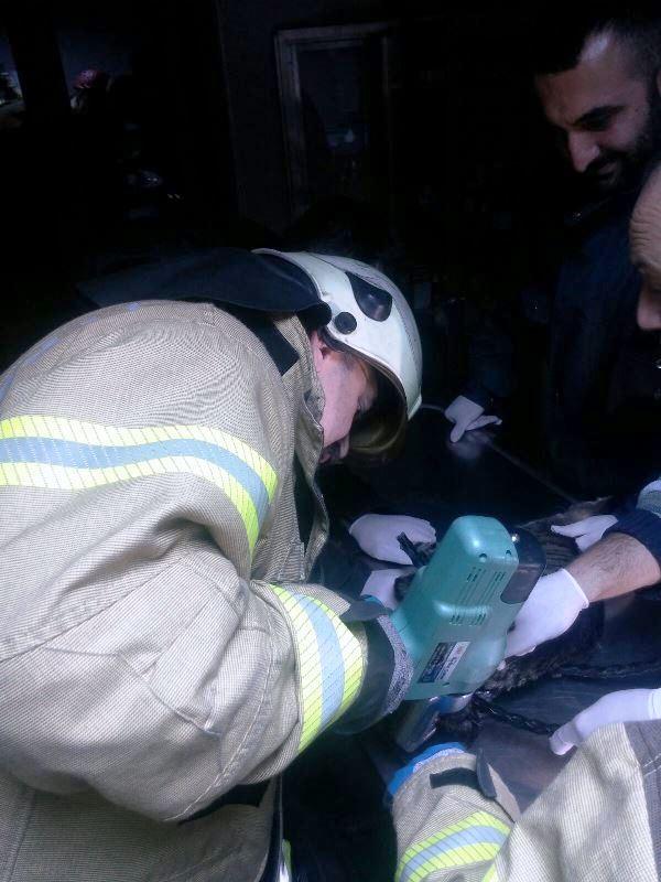 Demir korkuluklara sıkışan kediyi kurtardık - Haberler - İstanbul İtfaiyesi