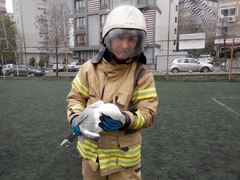 Halı saha filesine takılan martıyı kurtardık - Haberler - İstanbul İtfaiyesi