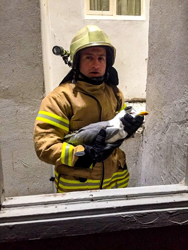 Avcılarda hayvan kurtarma - Haberler - İstanbul İtfaiyesi