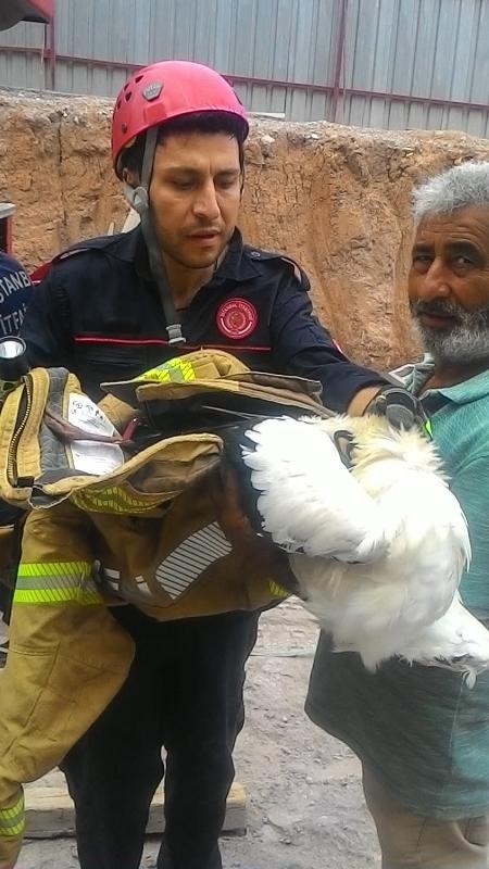 Vinçte mahsur kalan martıyı kurtardık - Haberler - İstanbul İtfaiyesi