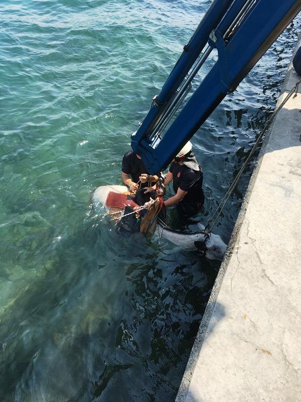 Sarıyerde hayvan kurtarma  - Haberler - İstanbul İtfaiyesi