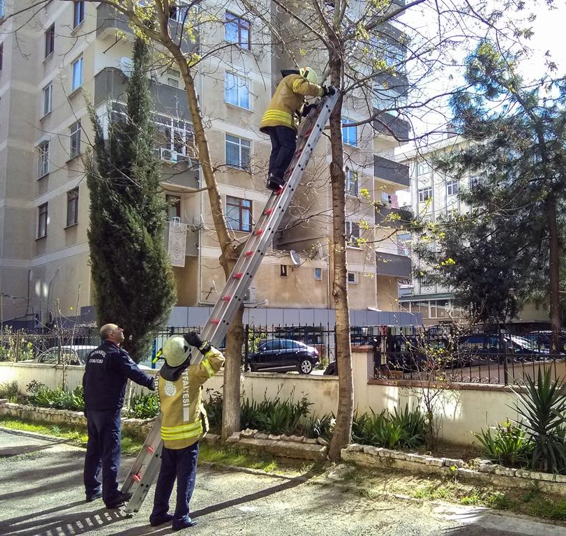Kartalda hayvan kurtarma - Haberler - İstanbul İtfaiyesi