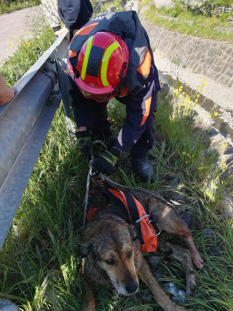 Maltepede hayvan kurtarma - Haberler - İstanbul İtfaiyesi