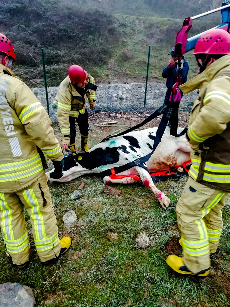 Beykozda hayvan kurtarma - Haberler - İstanbul İtfaiyesi