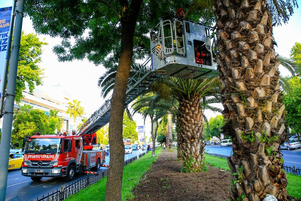 Ağaçta mahsur kalan minik dostumuzu kurtardık - Haberler - İstanbul İtfaiyesi