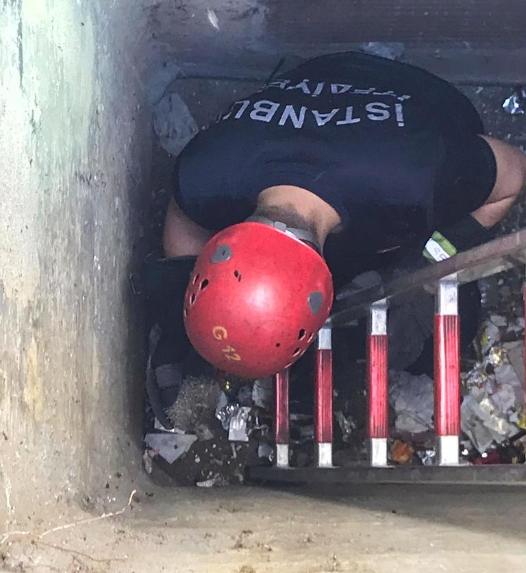 Mahsur kalan kirpiyi kurtardık - Haberler - İstanbul İtfaiyesi