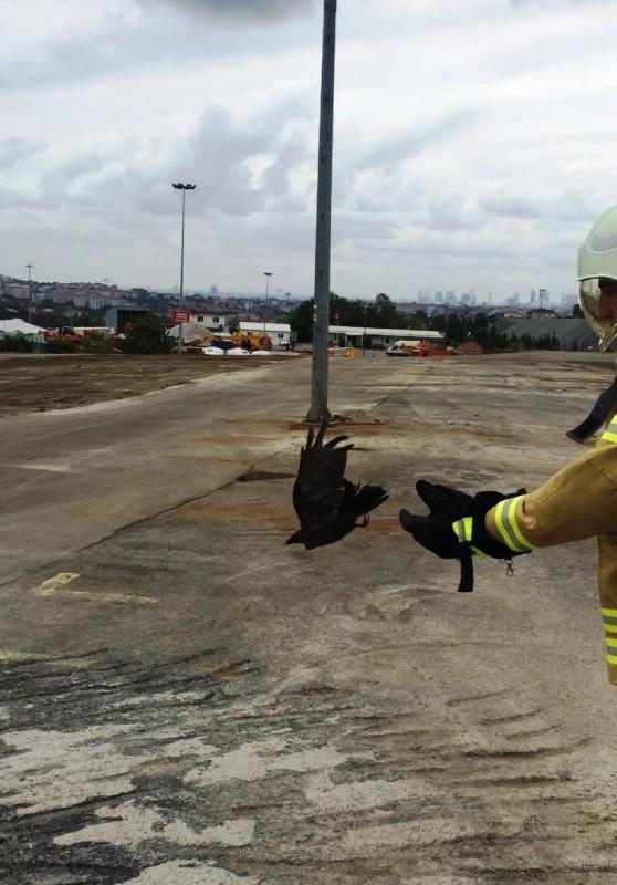 Mahsur kalan kargayı kurtardık - Haberler - İstanbul İtfaiyesi