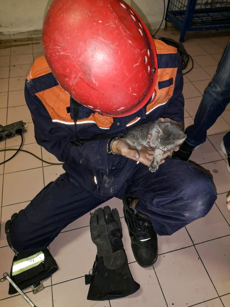 Ataşehirde hayvan kurtarma - Haberler - İstanbul İtfaiyesi