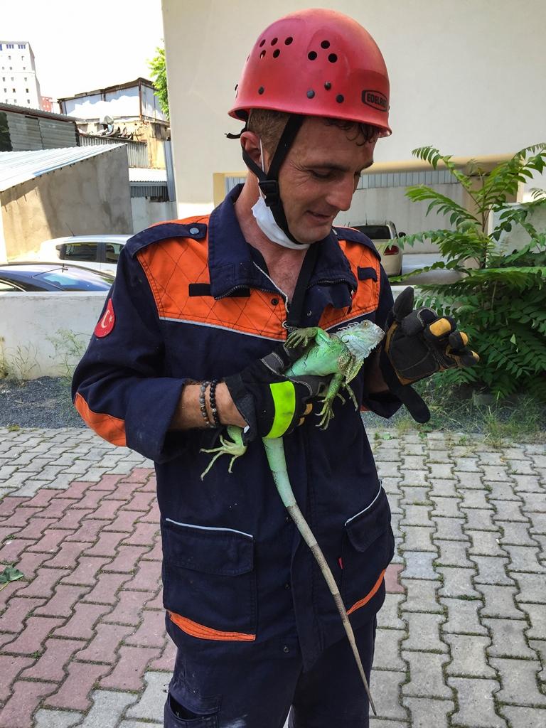 Kayışdağında hayvan kurtarma - Haberler - İstanbul İtfaiyesi