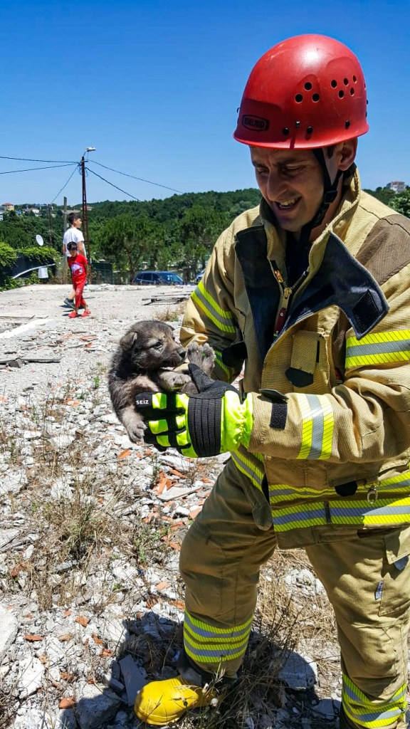 Kuyuda mahsur kalan dostumuzun imdadına yetiştik - Haberler - İstanbul İtfaiyesi
