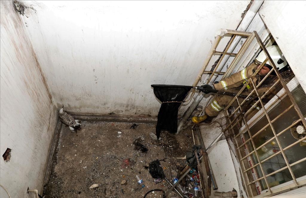 Fatihte hayvan kurtarma - Haberler - İstanbul İtfaiyesi